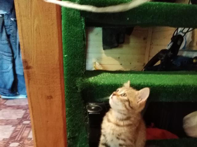 Продаю: Котята красавец и красавица