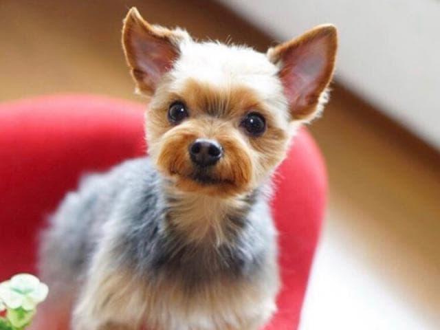 Предлагаю услуги: Стрижка собак и кошек Выезд на дом Без наркоза