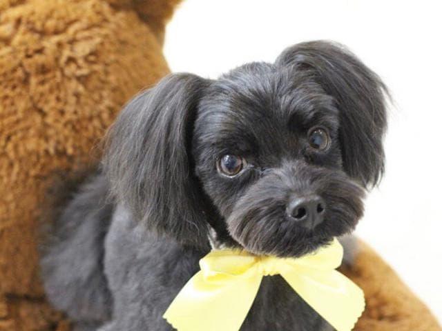 Предлагаю услуги: Стрижка собак и кошек Выезд на дом Без наркоза фото3