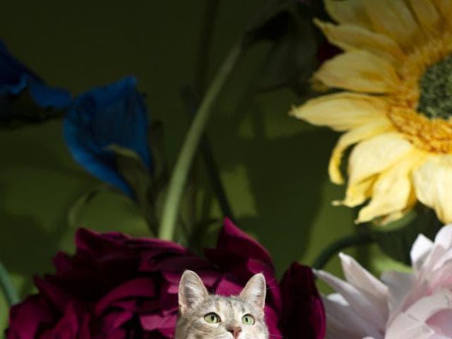 Отдам в дар: Кошка Джулия ищет дом фото2