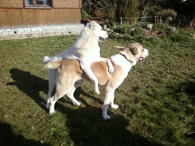 Предлагаю услуги: Инструктор по вязкам собак