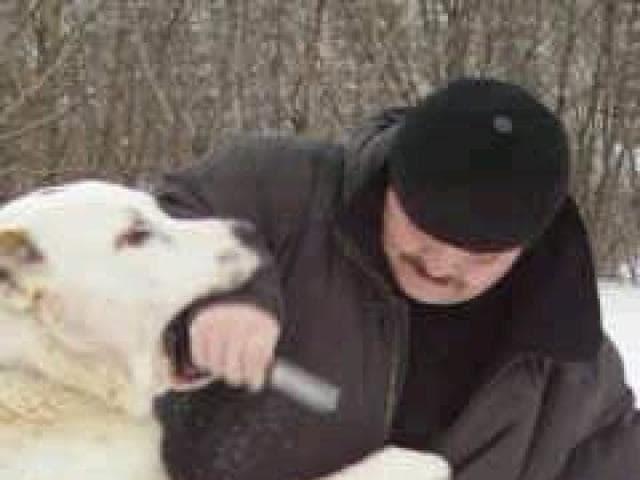 Предлагаю услуги: Дрессировка собак у зоопсихолога