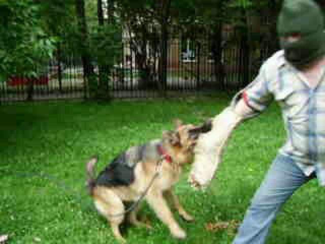 Предлагаю услуги: Дрессировка собак у зоопсихолога фото2