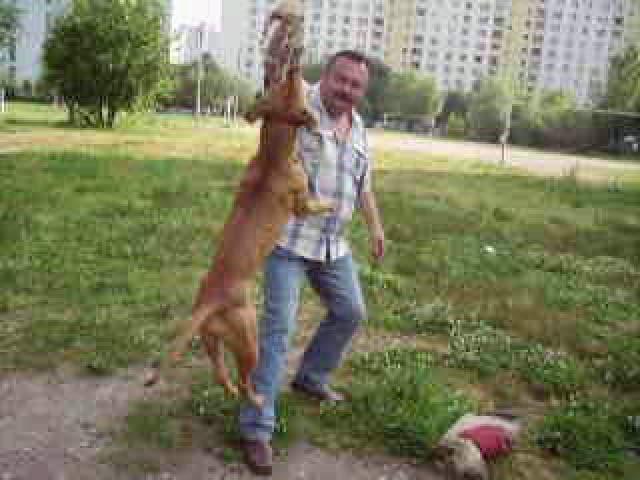 Предлагаю услуги: Дрессировка собак у зоопсихолога фото3