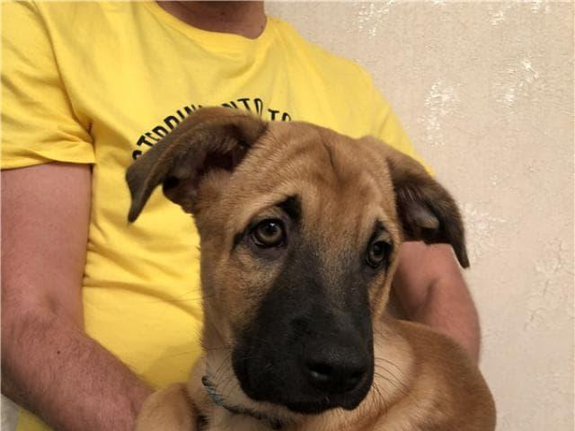 Отдам в дар: Чудесный щенок Бонд ищет дом фото2