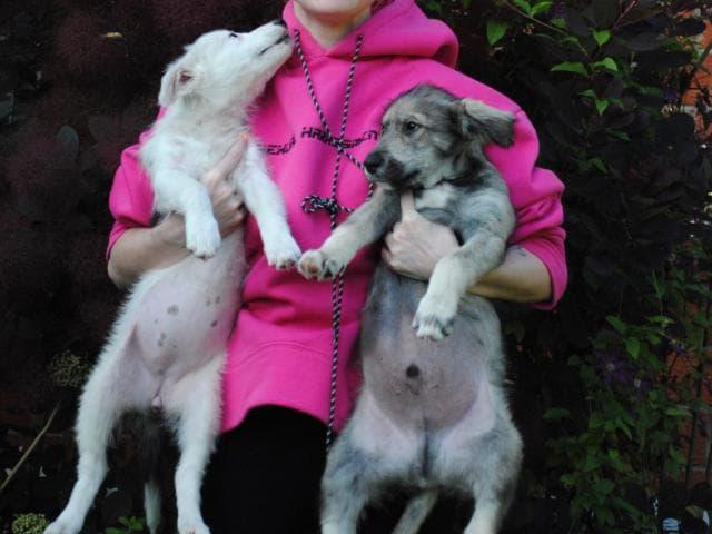 Отдам в дар: Милейшие щенята ищут дом