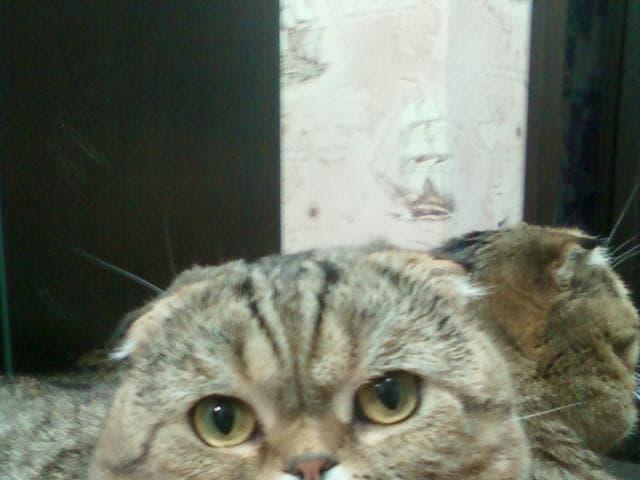 Вязка: Очень ласковый котик - приглашает в гости / вязка