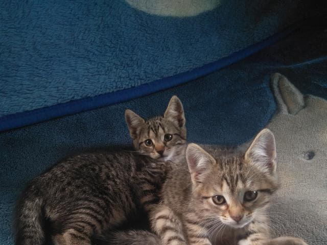 Отдам в дар: Милые котята ищут добрых хозяев