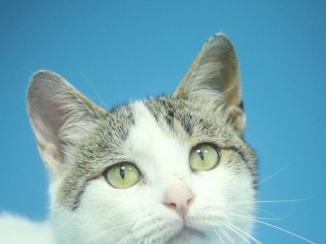 Отдам в дар: Ласковый котик ищет дом