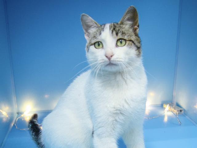 Отдам в дар: Ласковый котик ищет дом фото2