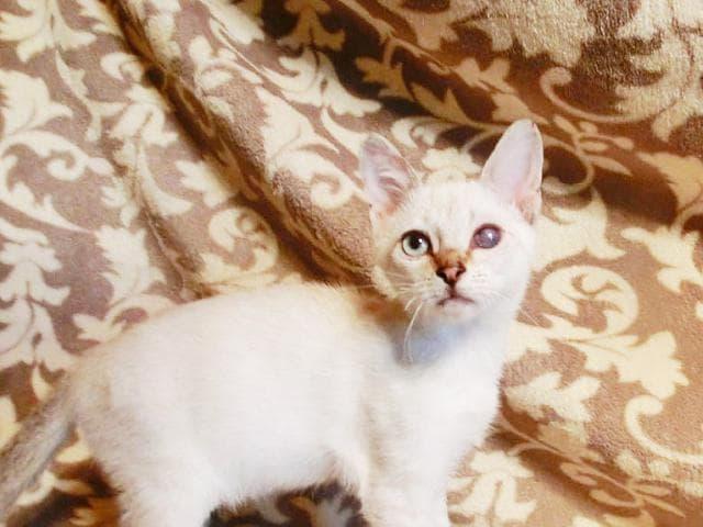 Отдам в дар: Котята Жан-Батист и Жан-Кристоф в добрые руки фото2