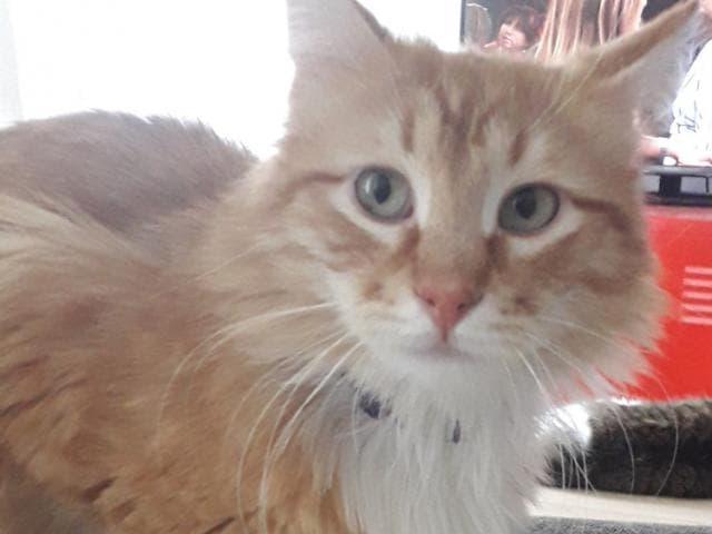 Отдам в дар: Забавный кот Луи (Луиша) в добрые руки фото2