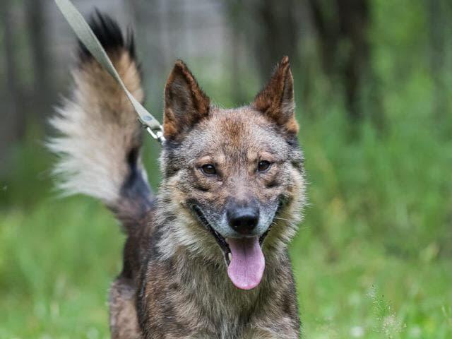 Отдам в дар: Волчок ждёт тебя фото2