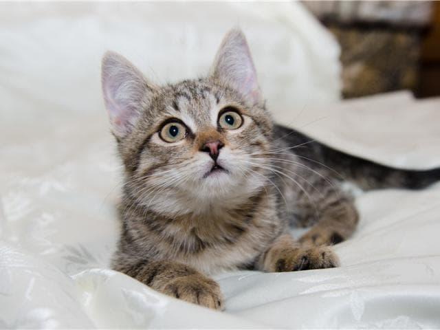 Отдам в дар: Котенок Сонечка в добрые руки