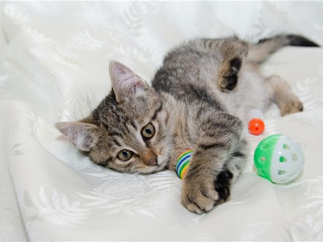 Отдам в дар: Котенок Сонечка в добрые руки фото2