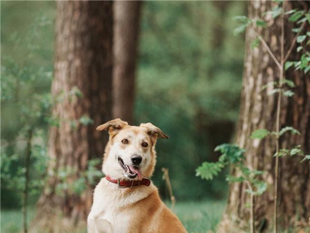 Отдам в дар: Изящная, красивая собака Айрис в добрые руки