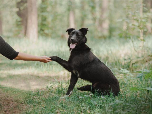 Отдам в дар: Чудесная собака Гретта в добрые руки фото3