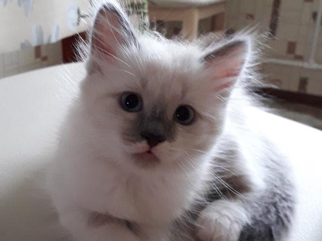 Отдам в дар: котенок