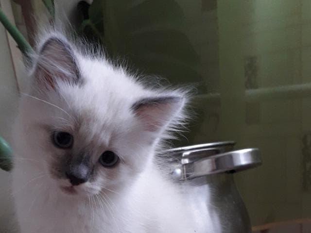 Отдам в дар: котенок фото2