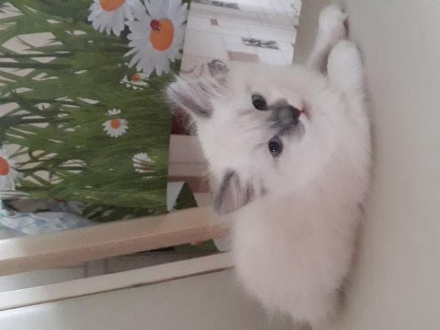 Отдам в дар: котенок фото3