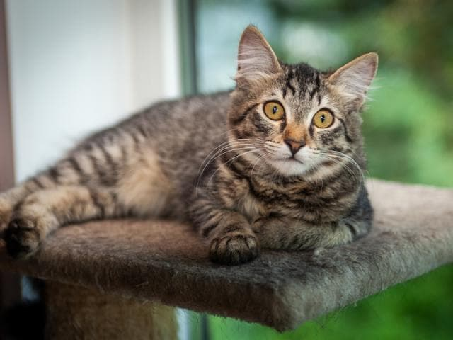 Отдам в дар: Ищет дом котенок Мося, 4 месяца