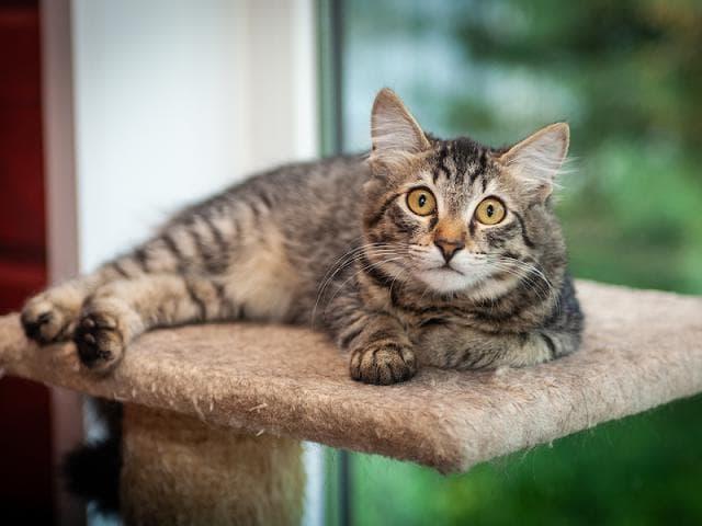 Отдам в дар: Ищет дом котенок Мося, 4 месяца фото3