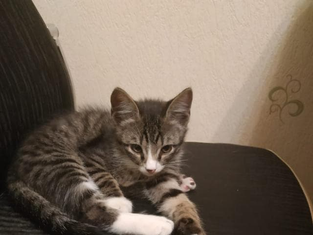 Отдам в дар: Отдам котенка в хорошие руки фото2