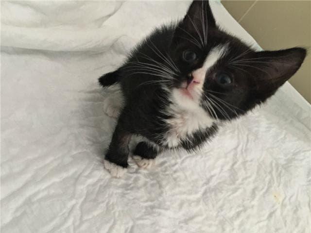 Отдам в дар: Чудесный котенок Смоки ищет дом фото3