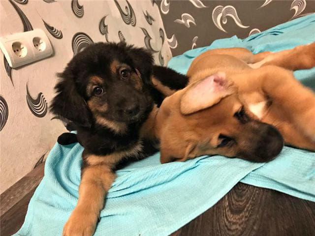 Отдам в дар: Замечательные щенки в добрые руки фото2