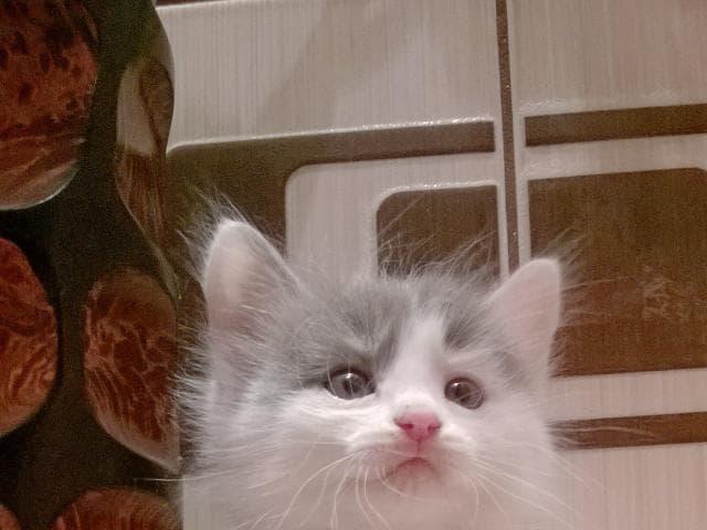 Отдам в дар: Котята в хорошие руки фото2