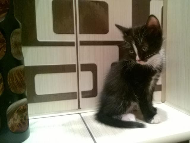 Отдам в дар: Котята в хорошие руки фото3