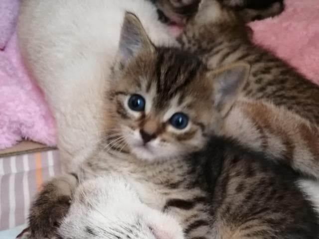 Отдам в дар: Отдам котят в добрые руки