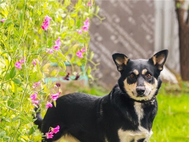 Отдам в дар: Чудесная собака Жулечка ищет дом
