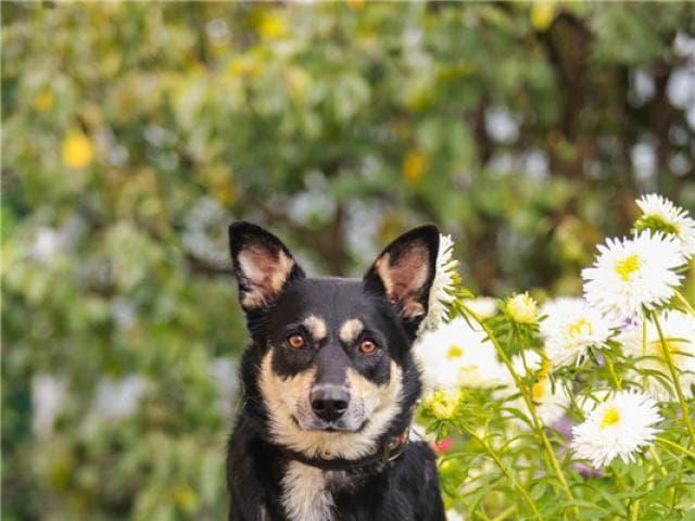 Отдам в дар: Чудесная собака Жулечка ищет дом фото2