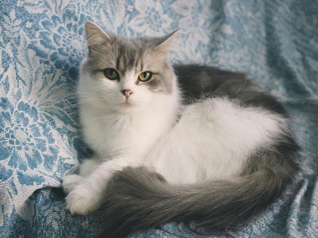 Отдам в дар: Кошечка Адель ищет дом