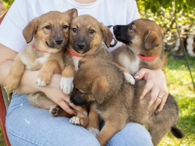 Отдам в дар: Маленькие щенки мечтают обрести дом