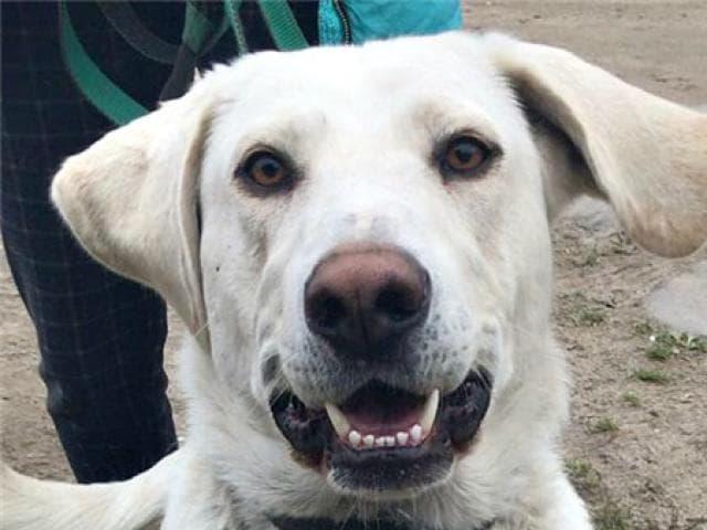Отдам в дар: Замечательный пёс Валет в добрые руки