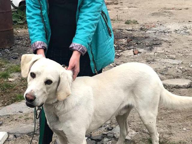 Отдам в дар: Замечательный пёс Валет в добрые руки фото2