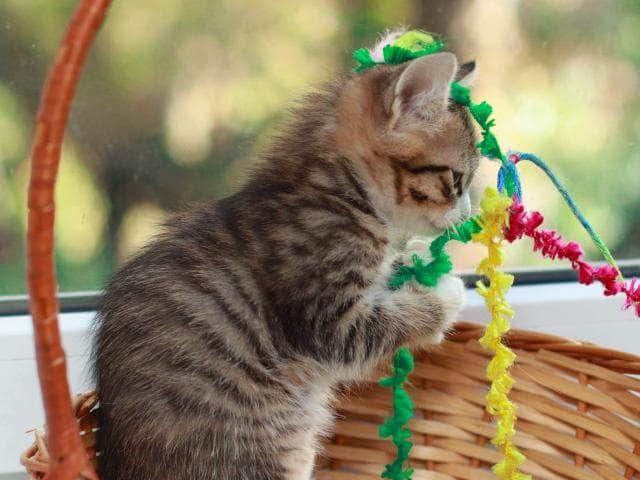 Отдам в дар: Ищем ручки для котят