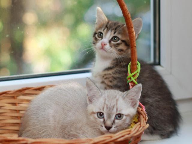 Отдам в дар: Ищем ручки для котят фото2