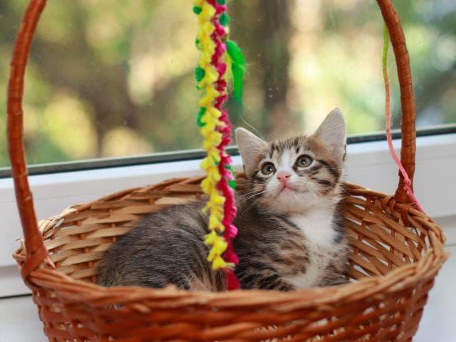 Отдам в дар: Ищем ручки для котят фото3