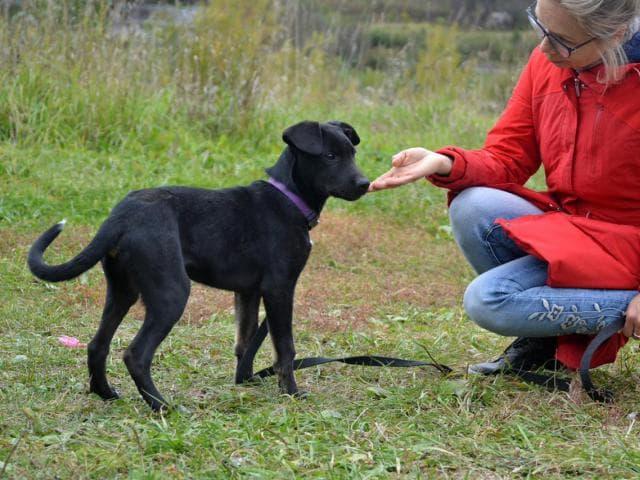Отдам в дар: Очаровательный щенок в добрые руки фото3