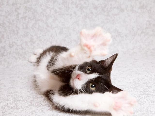Отдам в дар: Котенок Марсель, 5 мес ищет дом фото3