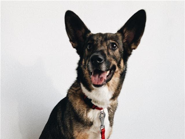 Отдам в дар: Собака-олененок ищет счастье