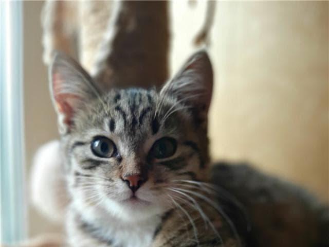 Отдам в дар: Котенок Матвей ищет семью