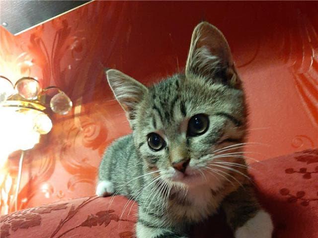 Отдам в дар: Котенок Матвей ищет семью фото2