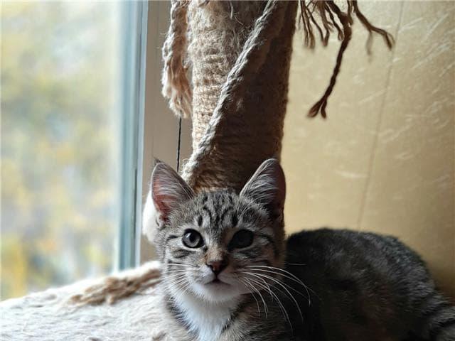 Отдам в дар: Котенок Матвей ищет семью фото3