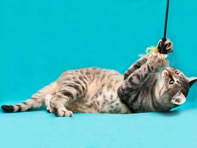 Отдам в дар: Кошечка Верона в добрые руки фото2