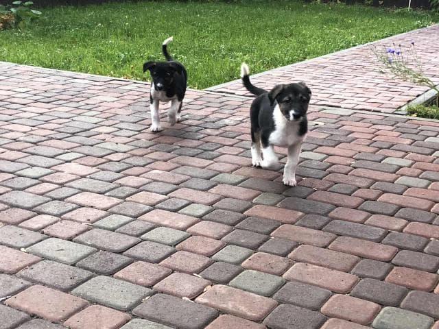 Отдам в дар: найдены 2 щенка