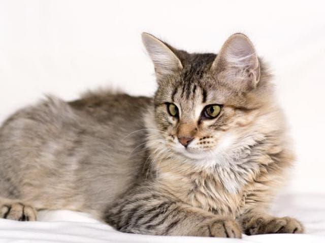 Отдам в дар: Котёнок-лапочка Ясмин в самые нежные ручки